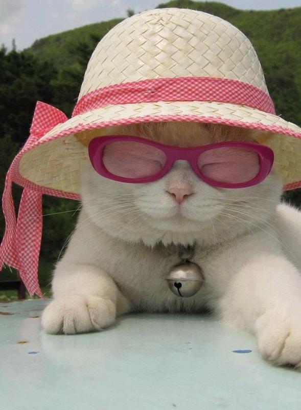 Cat In Bell Hat Meme