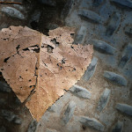 Poem: The Delicate Heart
